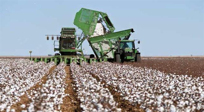 In terms of cotton, there has been a resurgence in the US over the last couple of years or so. What do you think has led to this?