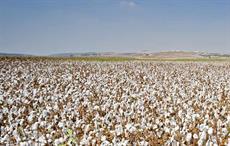 Ogun to bring over 10,000 ha under cotton cultivation