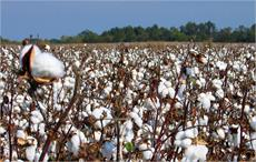 USDA forecasts world 2016/17 cotton output to be up 7%