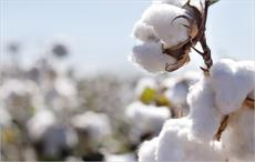 2016/17 global cotton output to be up 9%: USDA