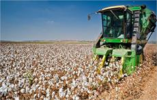 World cotton area to expand 5% in 2017-18: ICAC