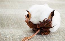 Shankar-6 cotton's value rises in international market