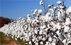Cotton Australia welcomes move on water infrastructure