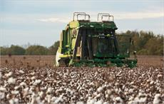 Global cotton area to increase 11% in 2017-18: ICAC