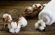 Cotton prices rise in Brazilian market in Nov '17