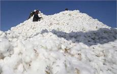 Egypt's cotton exports reduce by 38.4% in Jun-Aug 2017