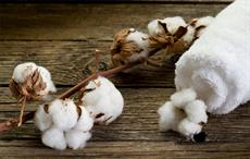 Oritain partners with Egyptian cotton firm MNCC