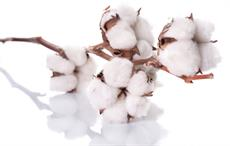 Egyptian Cotton most renowned Cotton brand in US: Report