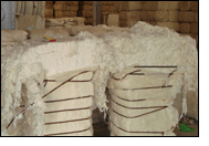 CCI to buy 1mn bales of cotton from Gujarat