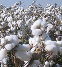 10-year Road Map for the African cotton sector