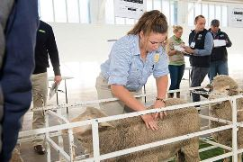 Over 80 students partake at AWI National Merino Challenge