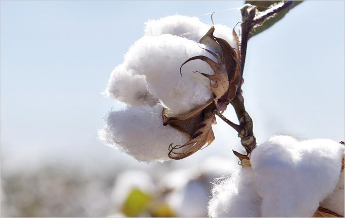 Cotton imports from Asia outside China to rise in 2015/16