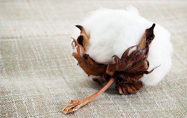 2016 challenging year for US cotton industry: NCC