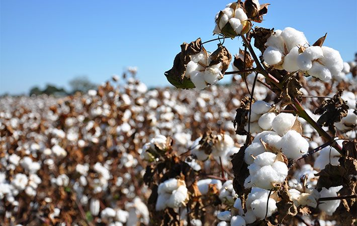 Polyester price drop cuts into cotton's share