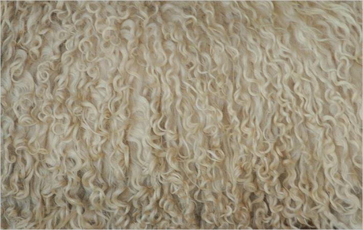 Aussie wool growers visit China to gain understanding