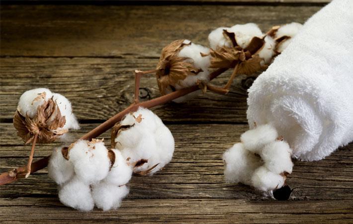 Cotton prices oscillate in Brazilian market in November