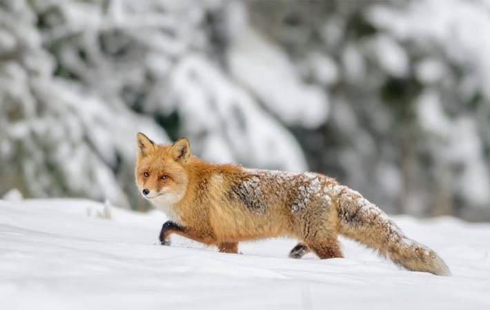Courtesy: Fur Free Retailer