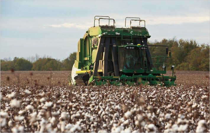 Cotton to be grown on 13.1mn acres in 2018: NCC Survey