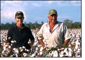 Record cotton yield for Queensland?