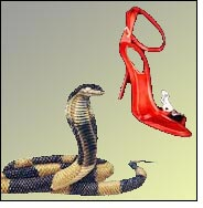 Egyptian cobra keeps watch over exotic shoes