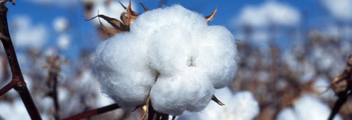Cotton dust - Impact on human health and environment in the textile industry