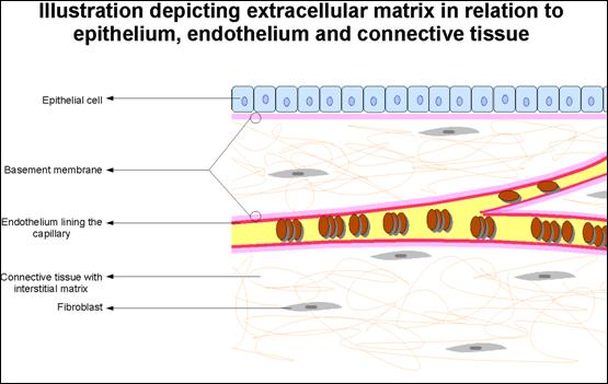 application of textile materials in tissues engineering 3