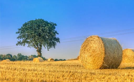 Corn-husk-fibre_small