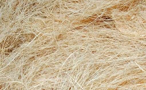 feasibility of okra mucilage coir fiber and wastepaper Descriptionxml 10 mongoldictionaryxxxxxx en dictionnaire test all 32 openofficeorg 32 dictionariesxcudictionaries/mn-mnaffdictionaries/mn-mndic52890.