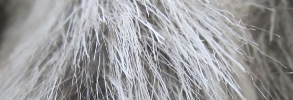 High Performance Fibers from Nature