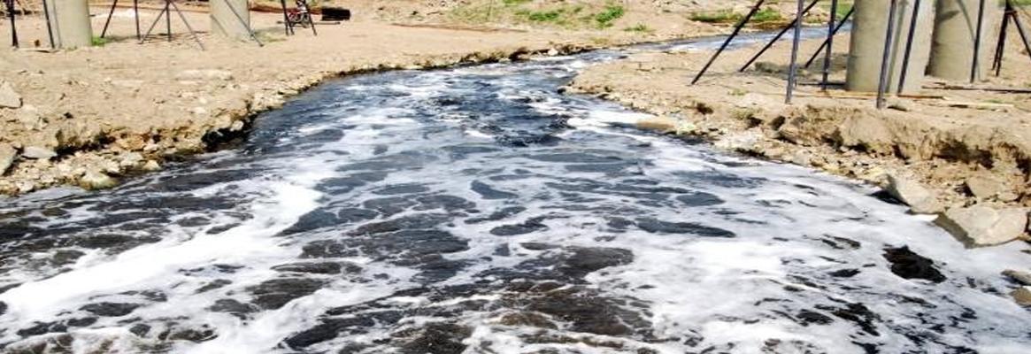 Adsorption of Textile Effluent Toxicity on Palmyra Wood
